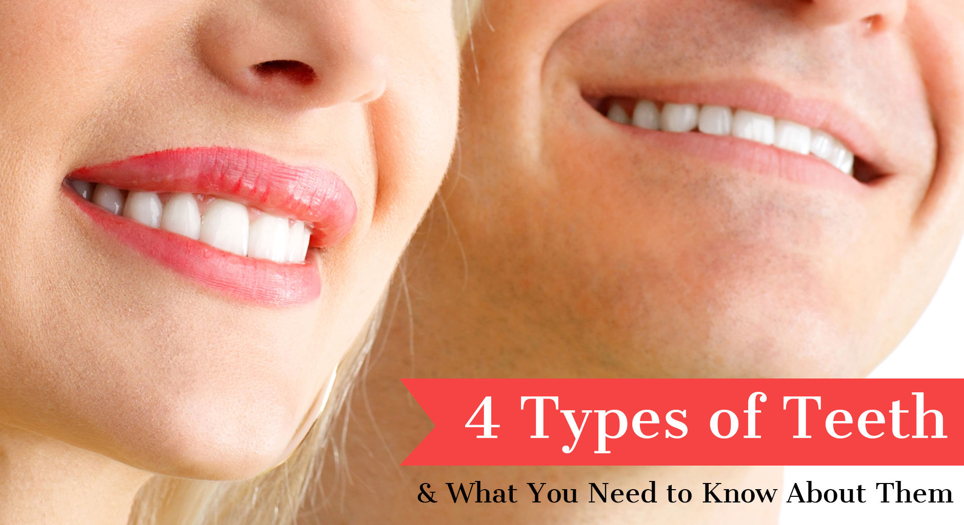 4 Types of Teeth & What You Need to Know